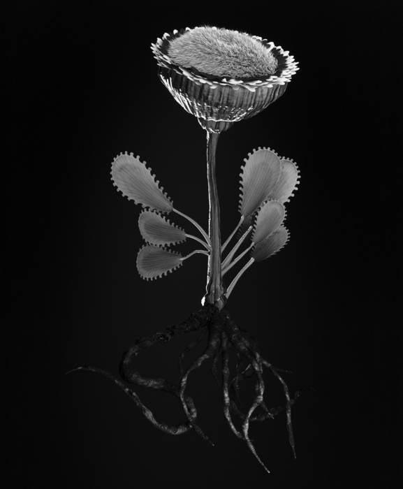 Miljohn Ruperto & Ulrik Heltoft,   Voynich Botanical Studies