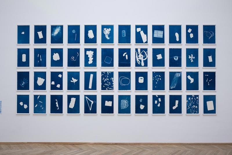 Nanna Debois Buhl, Botanizing on the Asphalt, 2015, Series of cyanotypes, Charlottenborg Kunsthal, Denmark (Photo: Torben Eskerod)