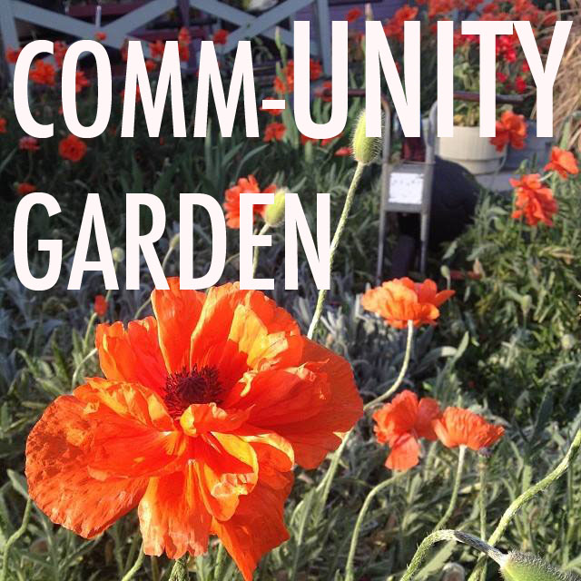Paonia Comm-UNITY Garden @ Elsewhere