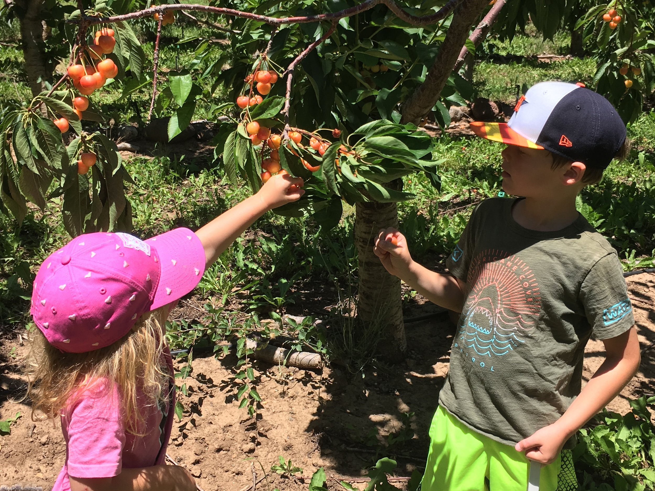 Edith and Rivers were lucky to be here during Paonia's famous cherry season!