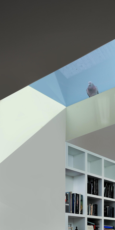WTAD_rooflight with pigeon.jpg
