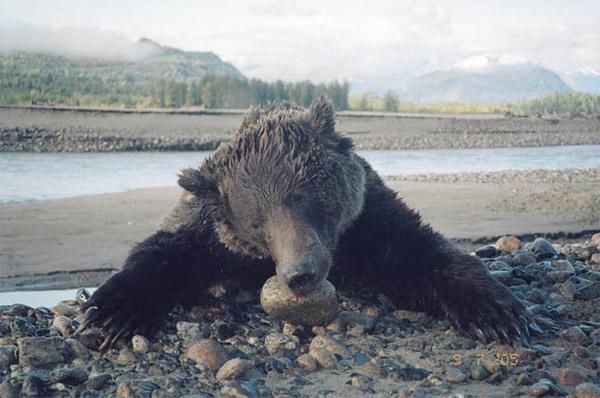brandts-bear-.jpg