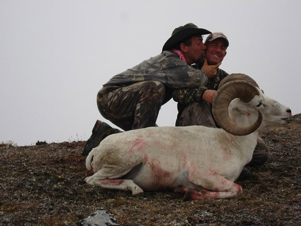 Dall Sheep - Alaska 030.jpg
