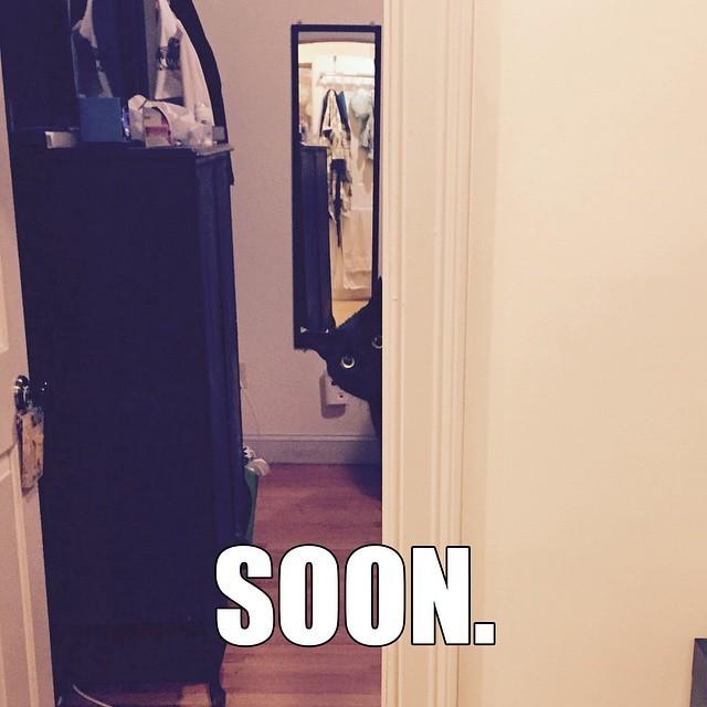 #SOON #cat