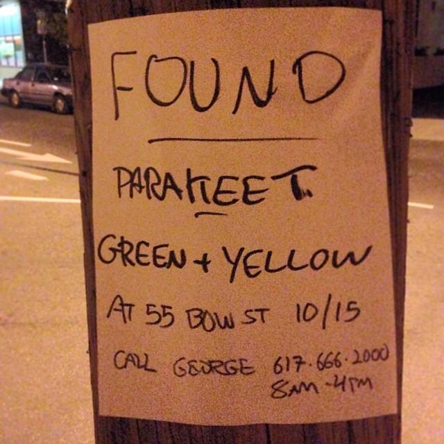 #parakeet #somerville #george