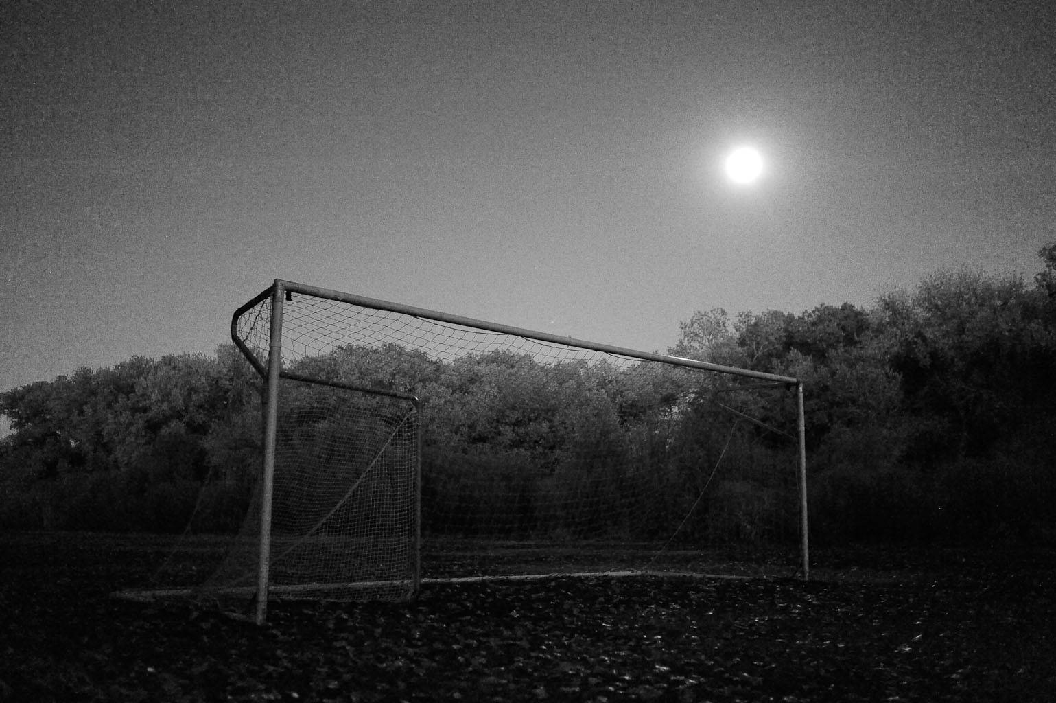 Albuquerque, NM  Moonlit night down in the bosque.
