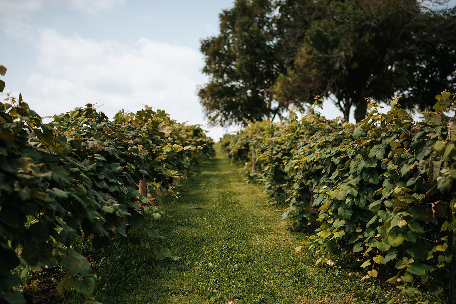 overthevineswisconsinwedding_0461.jpg