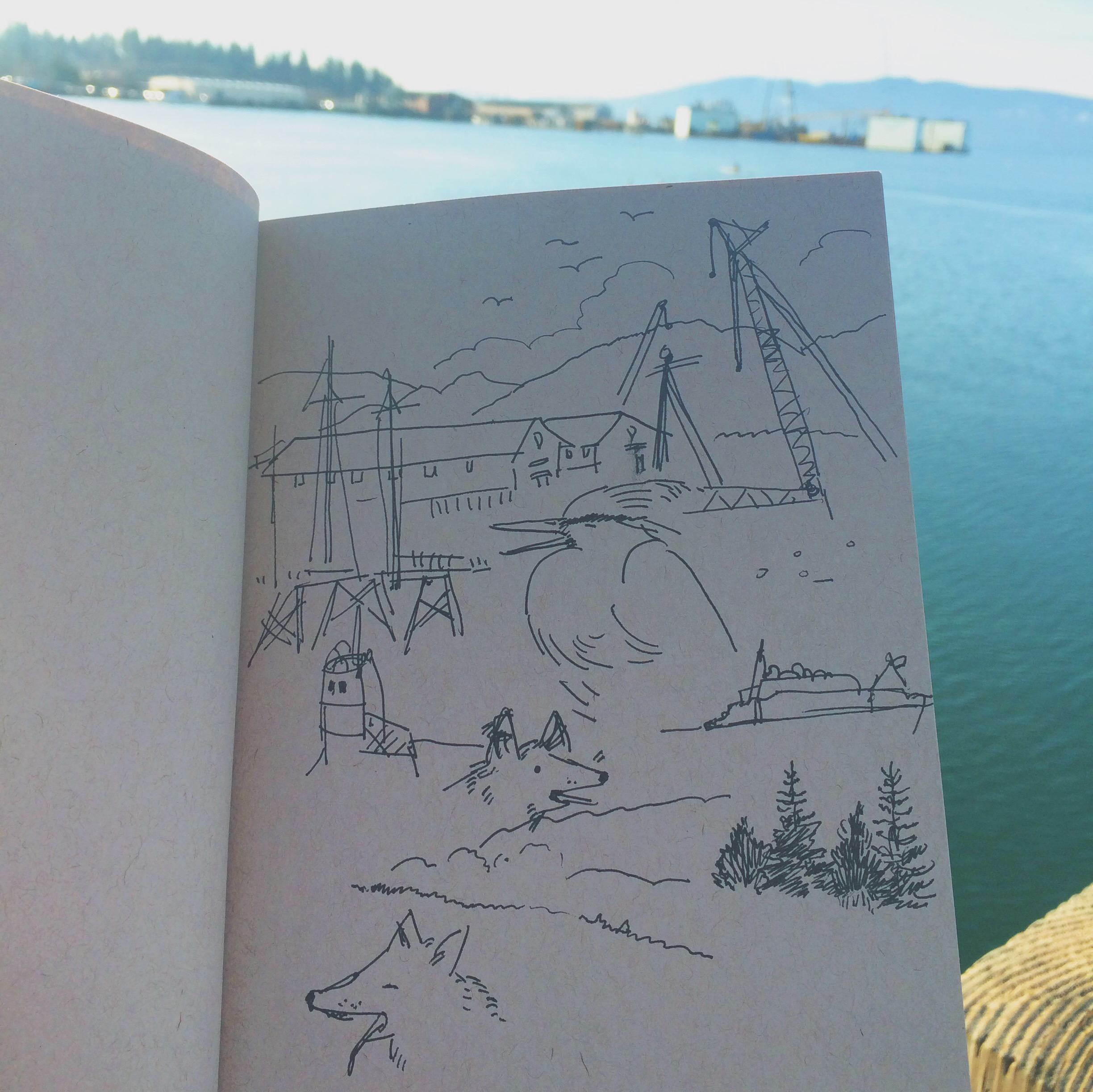 Sketching by the bay
