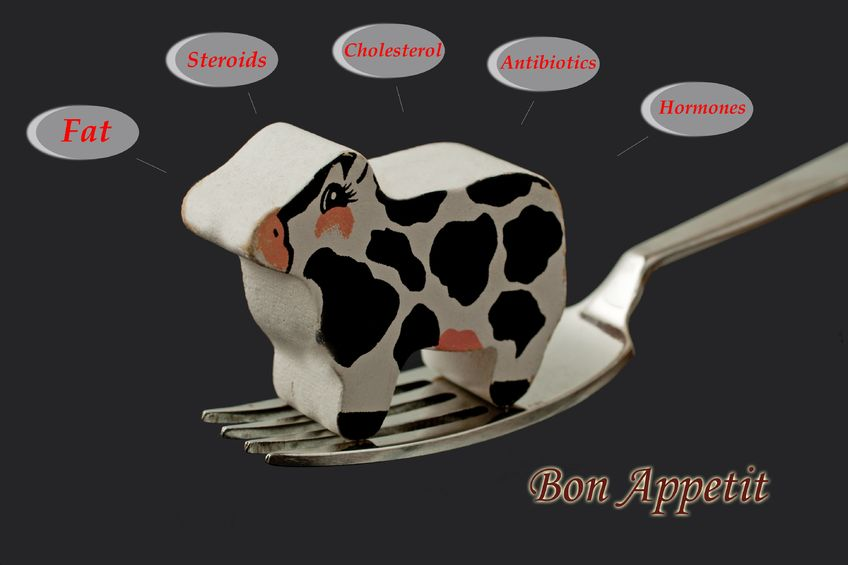 Toy Cow on fork - steroids, antibiotics, fat - Ultimate Health Personal Training Center