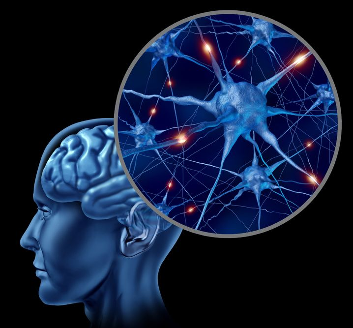 Photo of Brain and neurons - Ultimate Health Personal Training Center - Los Angeles