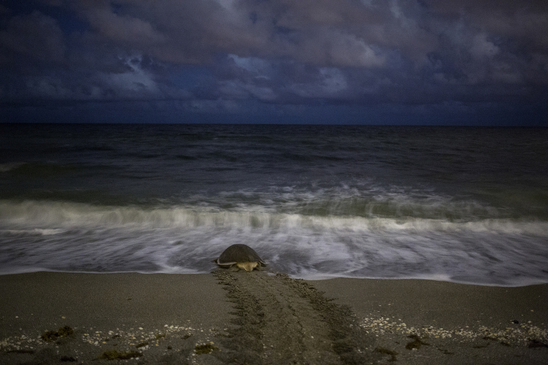 Again, since photographs weren't allowed, a quick Google Search resulted in another emotional moment that we were lucky enough to experience. Here is the Green Turtle going back into the ocean after laying her eggs. Click-thru for source.