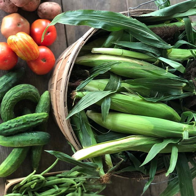 The Summer abundance coming out of our gardens and pastures is Incredible right now!! Come by the Trading Post tomorrow between 9-11 and stock up on fresh Organic Silver Queen sweet corn, cucumbers, tomatoes, green beans,  Fresh 100% Organic and Pasture raised chicken $6/lb  And so so much more.  Treat yourself to the flavors of summer!!