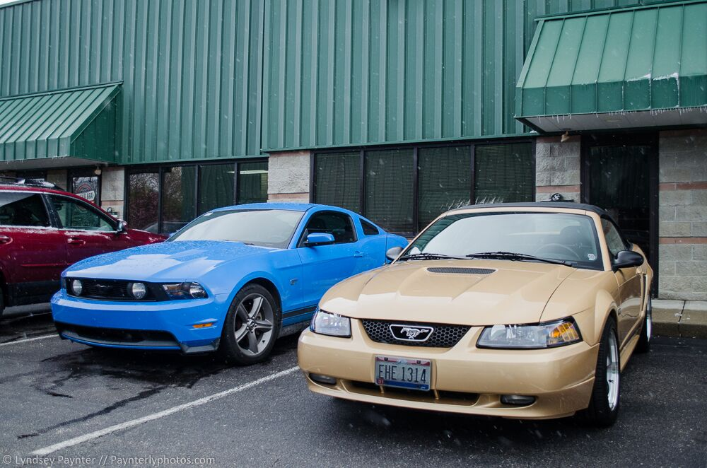 Ford Mustangs with Clear Bra