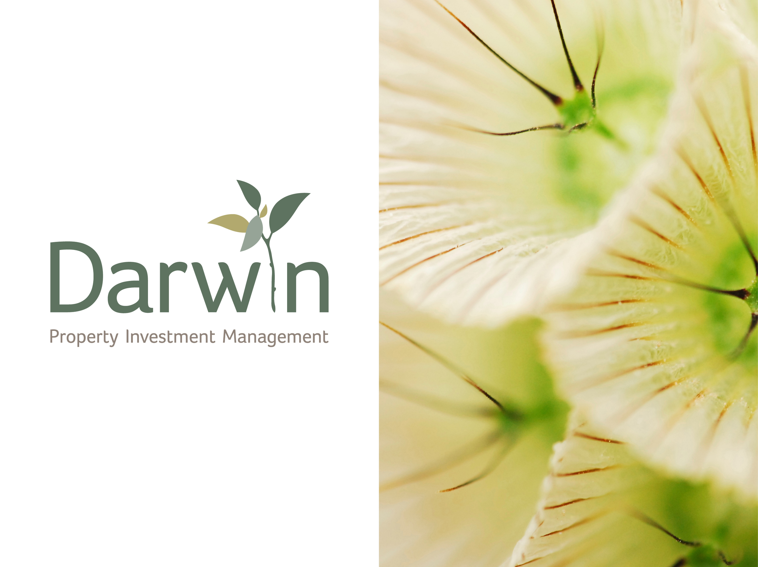 Darwin_1804x1350.jpg