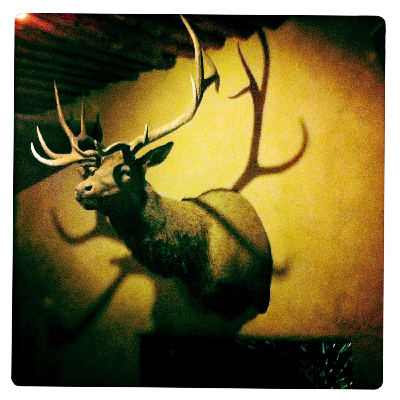 Deer Head upon Wall in Marathon TX Texas