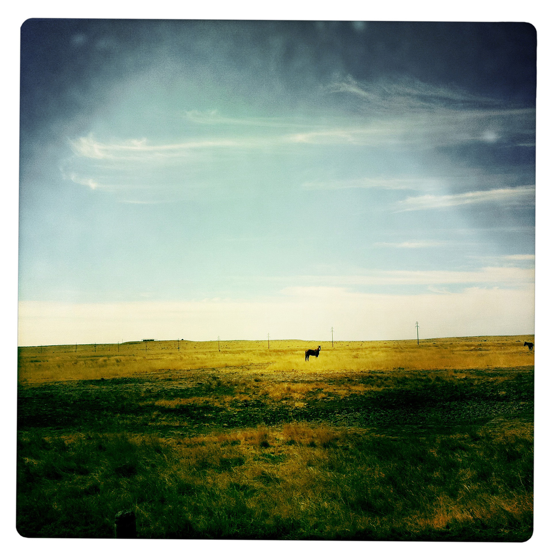 Horse on Plain in Marfa TX Texas