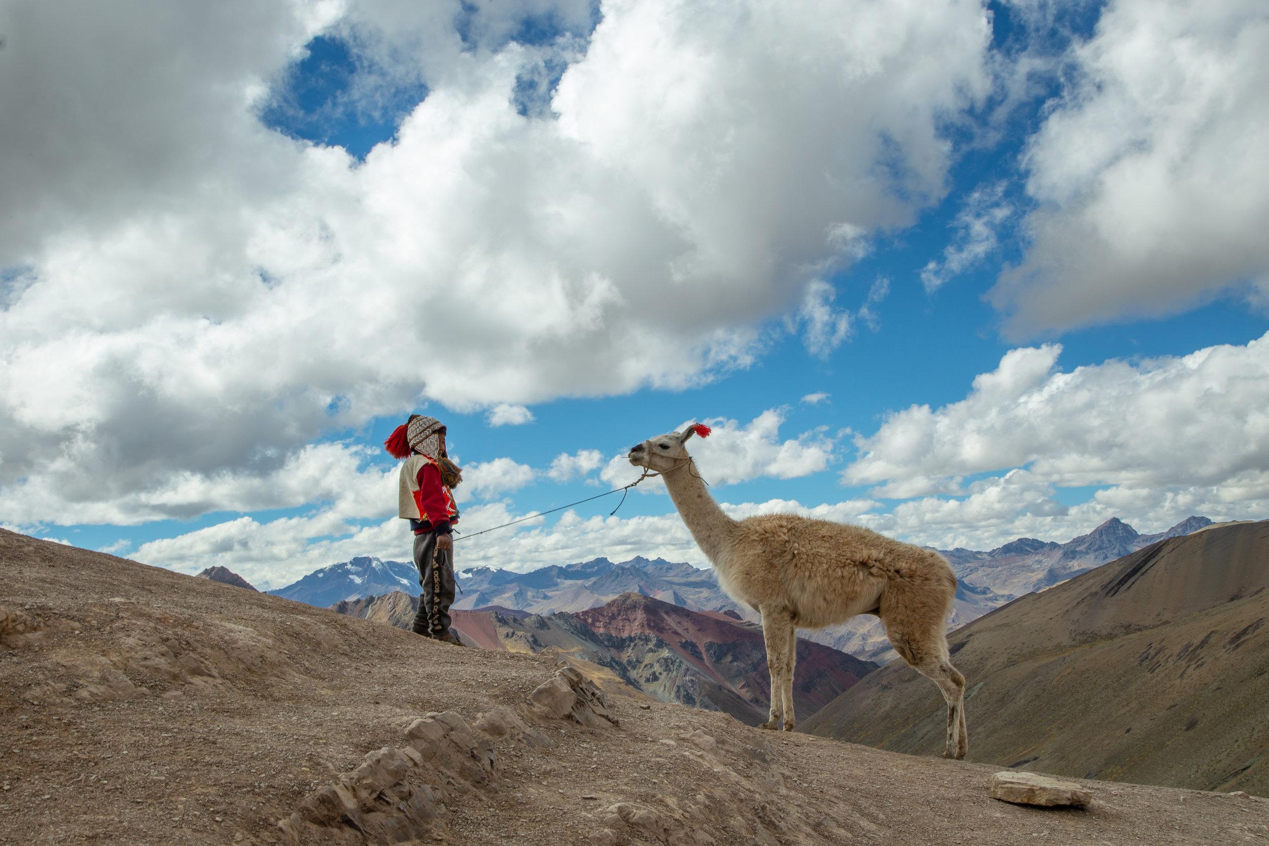 Boy and Alpaca - Rainbow Mountain, Cusco Region