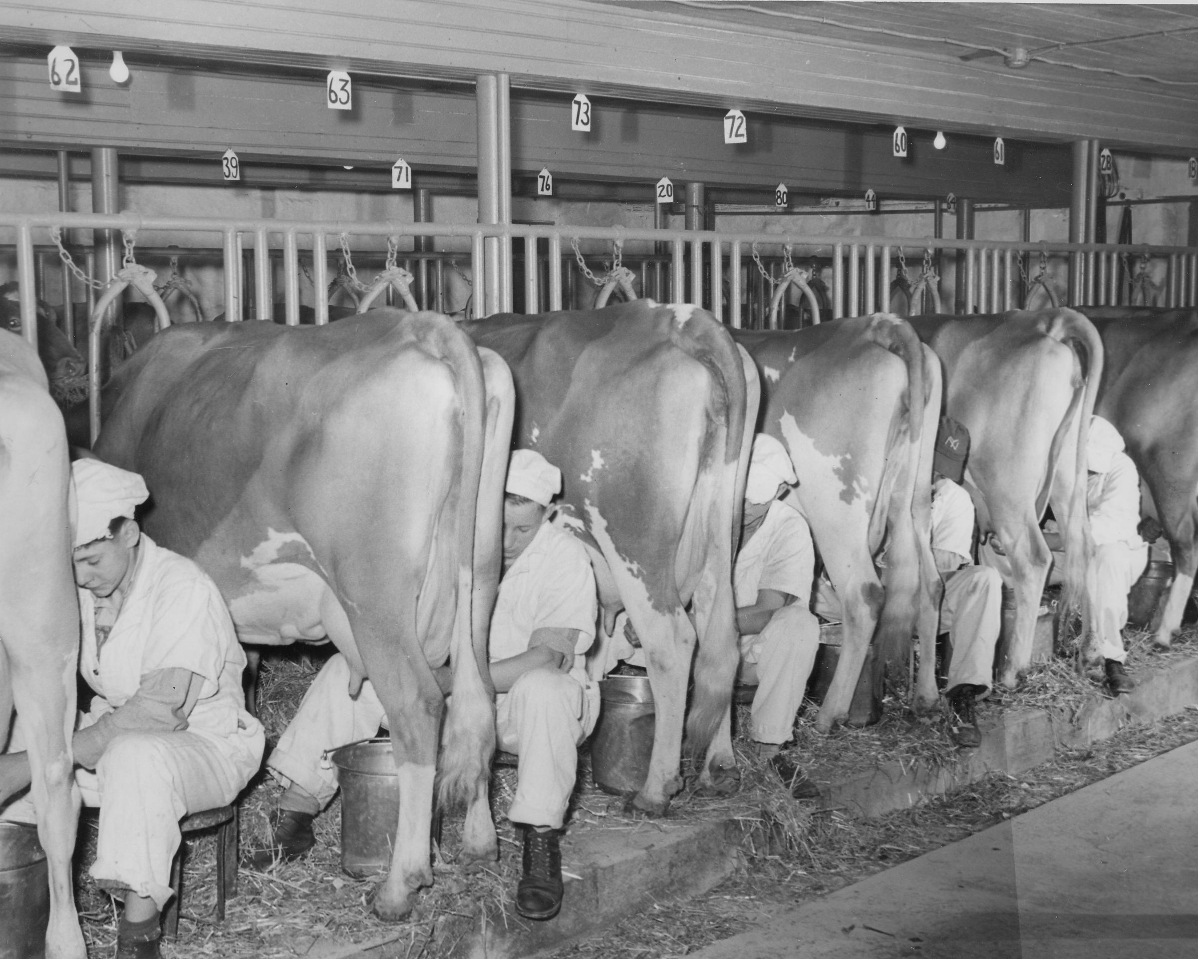 Barn_early_1950s.jpg