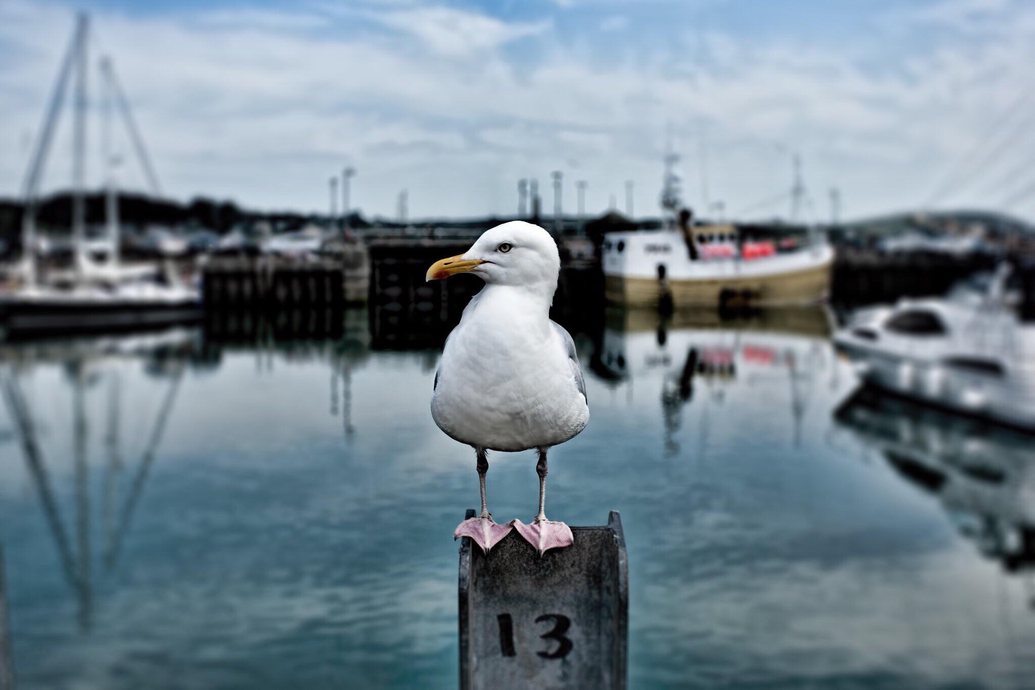 Bird on post, Cornwall