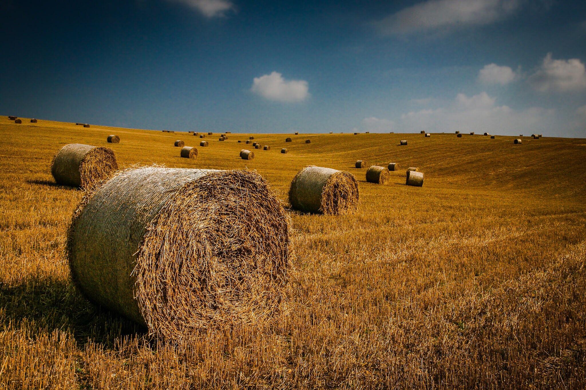 Hay bales, Dorset