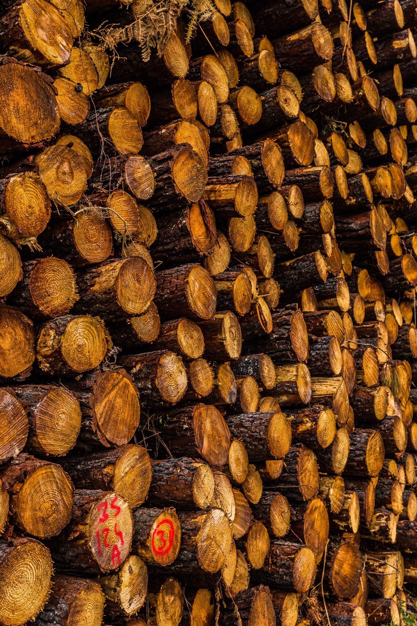 Logs, Aquitane, France, by landscape photographer Rick McEvoy