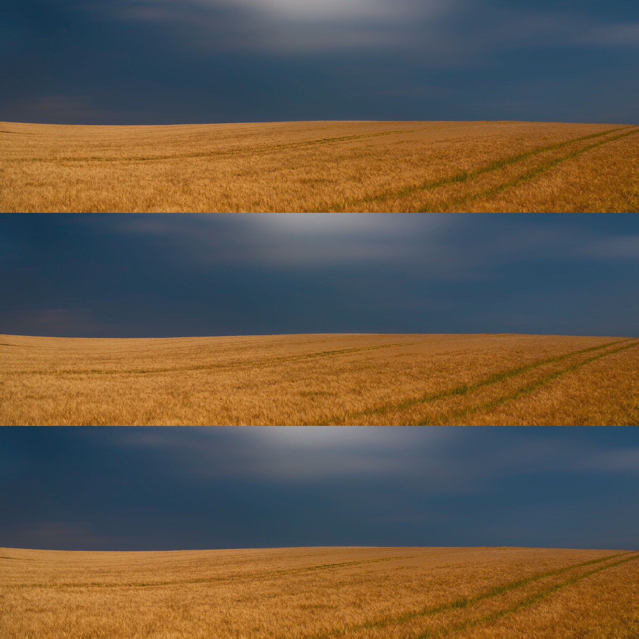 3 Dorset fields Landscape photography in Dorset by Rick McEvoy