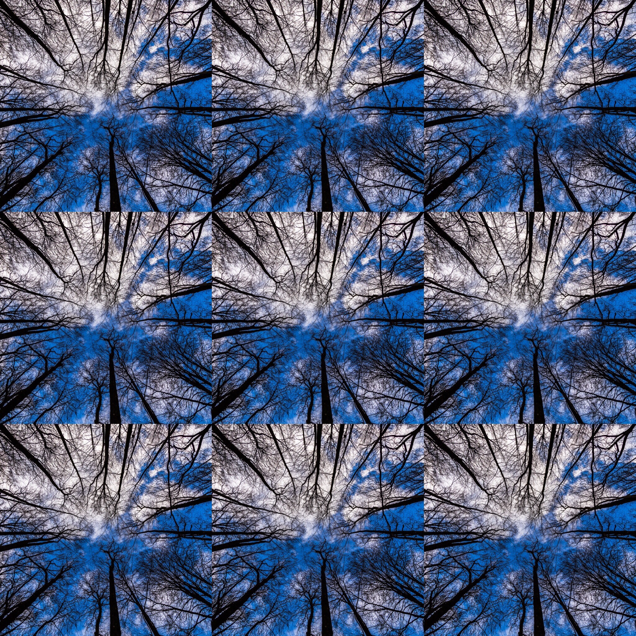9 Trees - a photo montage by Hampshire Photographer Rick McEvoy