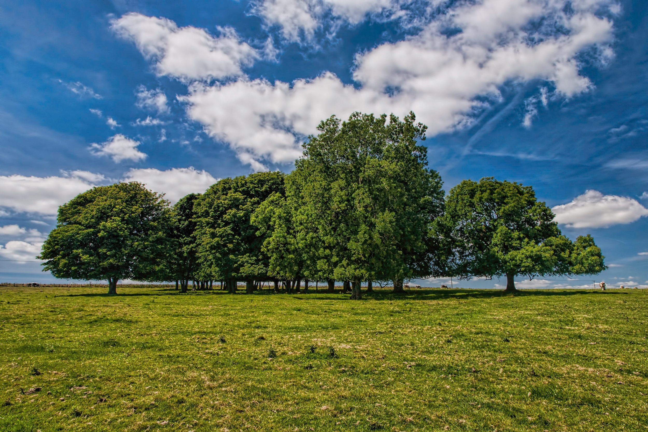 Trees by Dorset landscape photographer Rick McEvoy