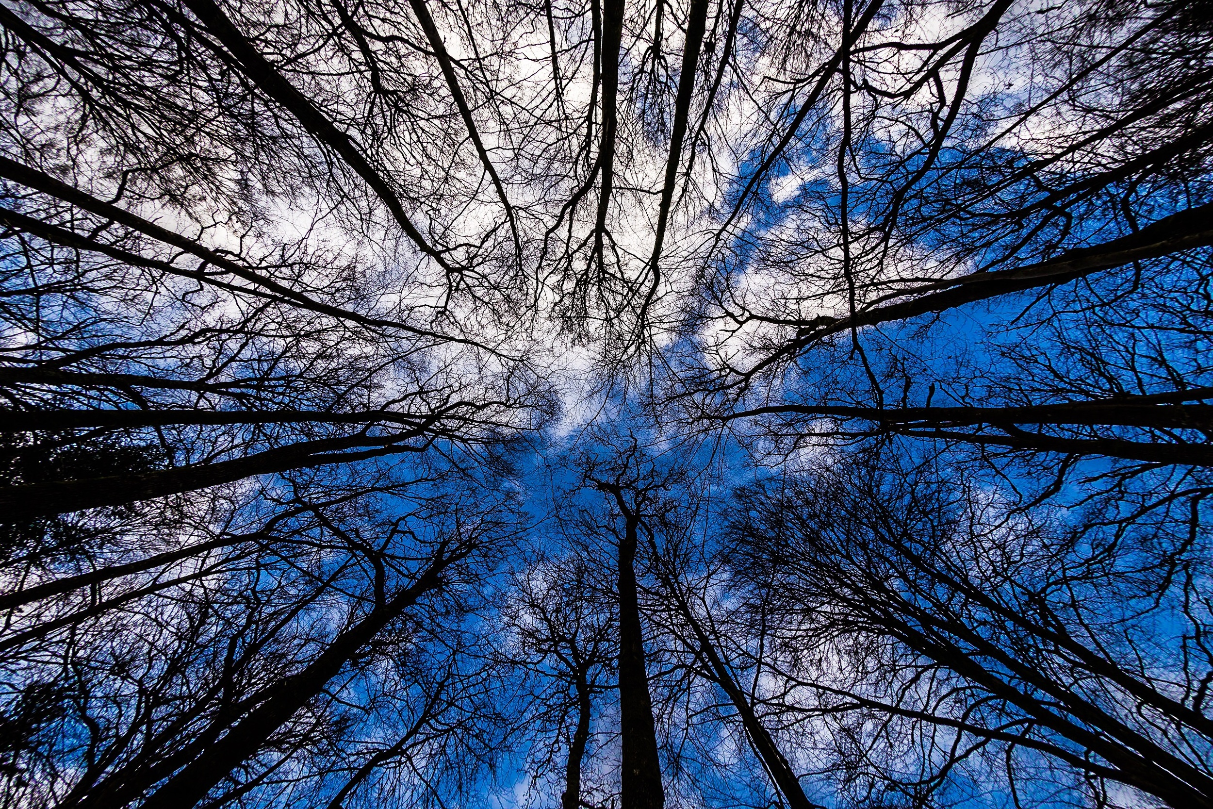 Trees. The great looking up shot I took in the New Forest - Hampshire Photography