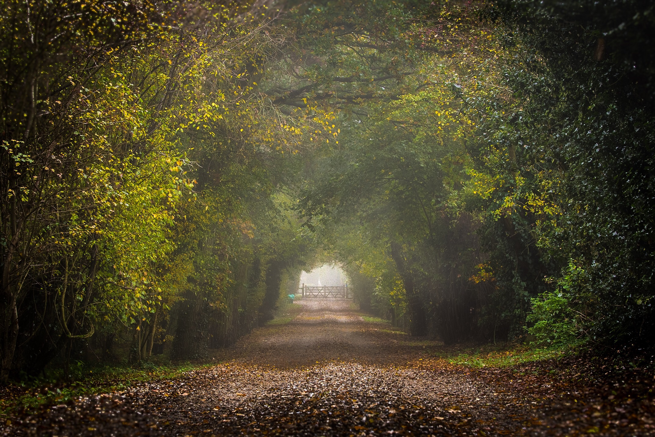 Road to gate. Dorset Photography by Rick McEvoy