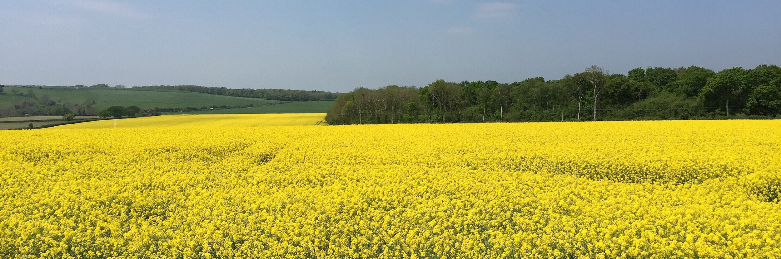 Yellow field by Hampshire Photographer Rick McEvoy