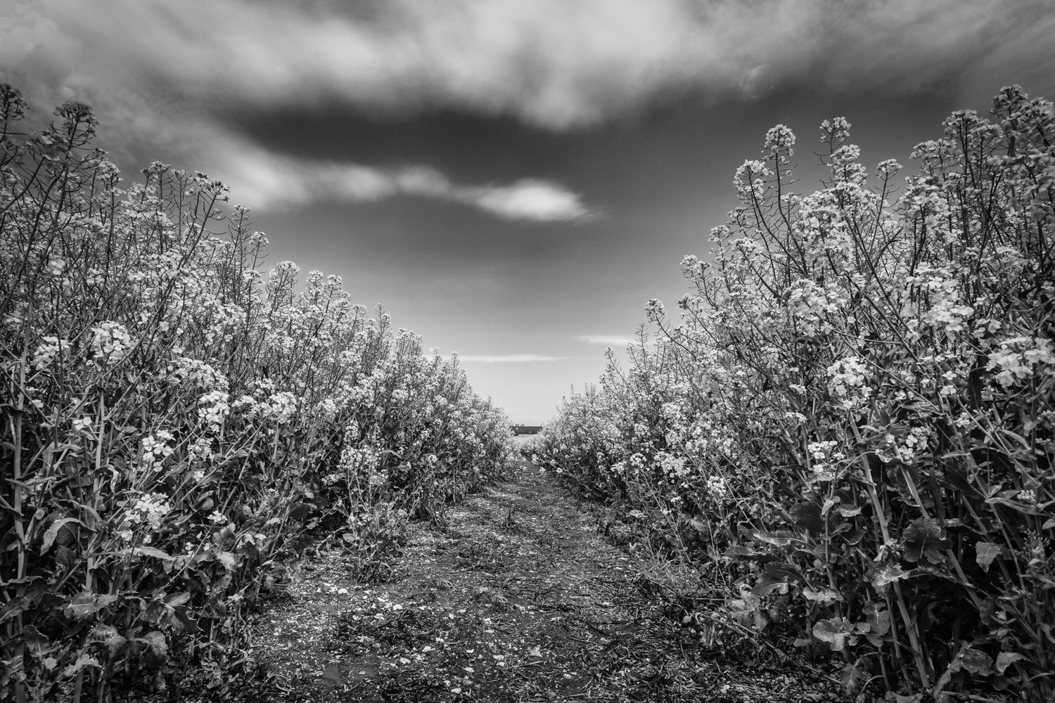 Hampshire Landsacpe Photography - Black and White Field