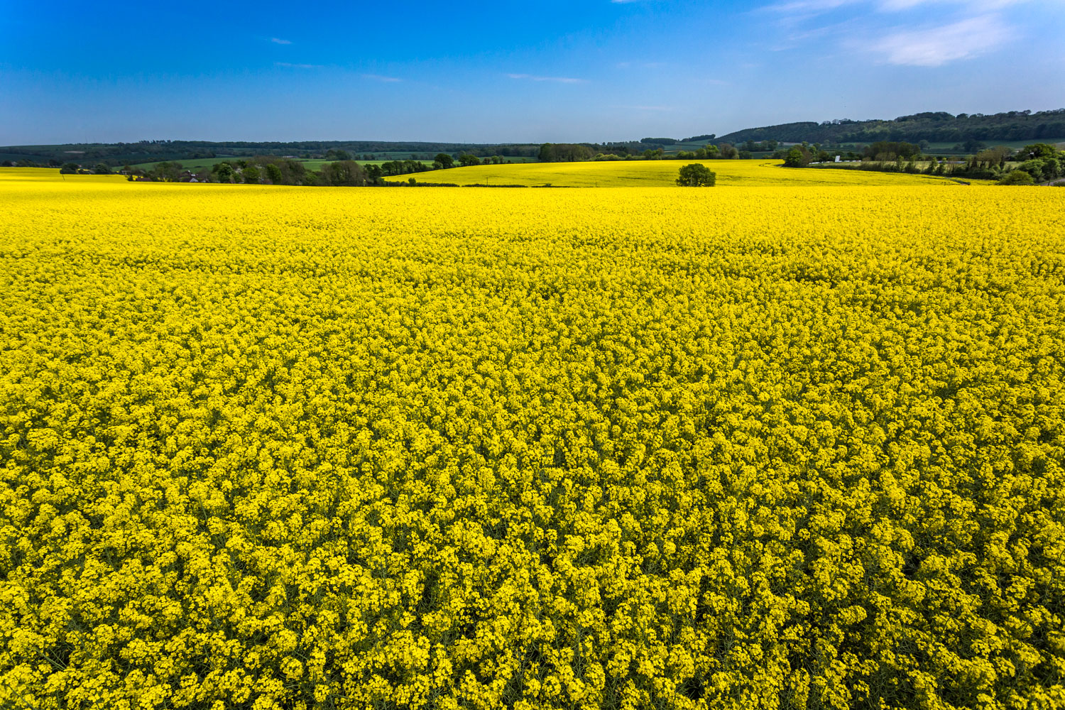 Looking down on a yellow field - great depth to this composition