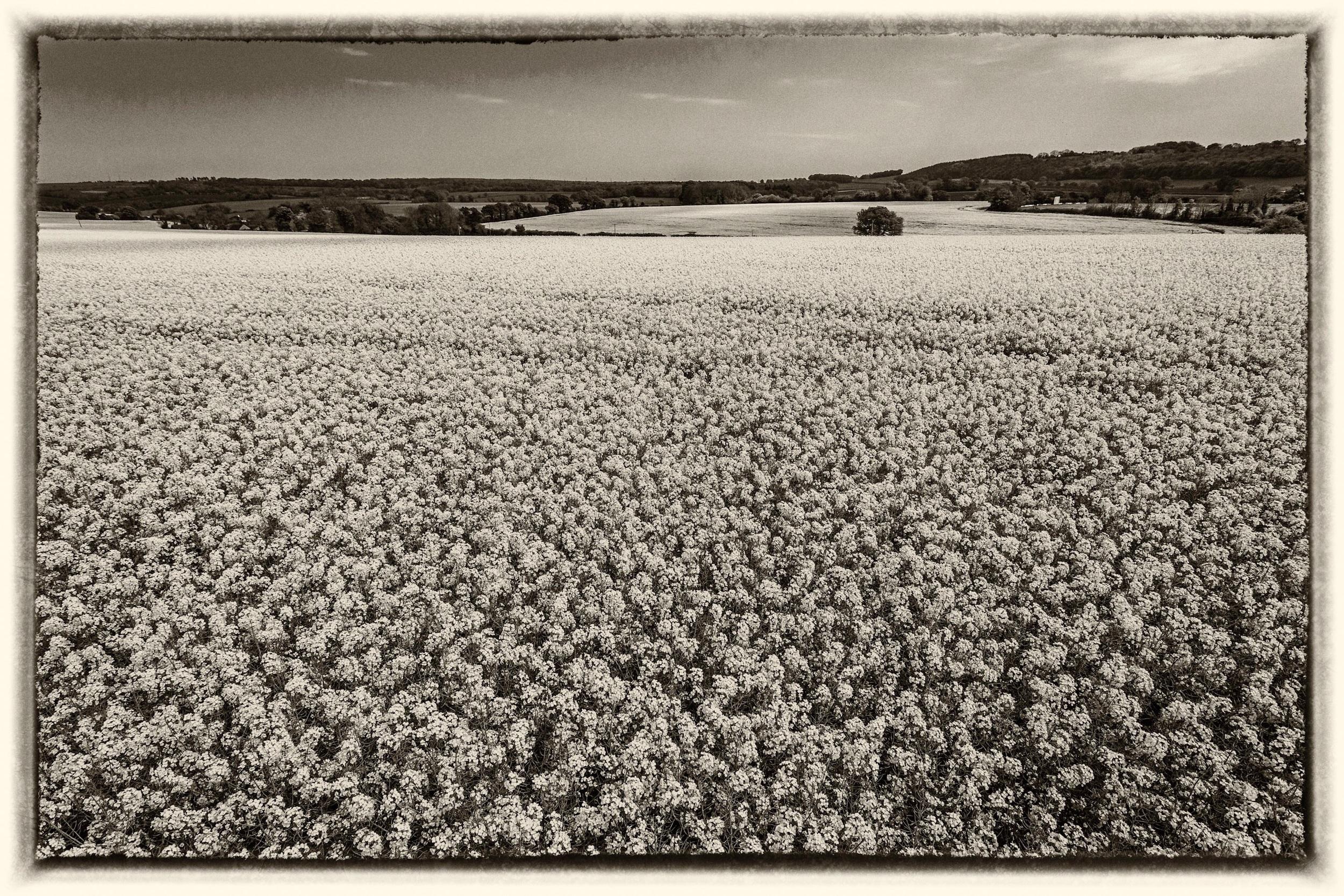 Black and white landscape photography processed using Nik Sikver Efex Pro