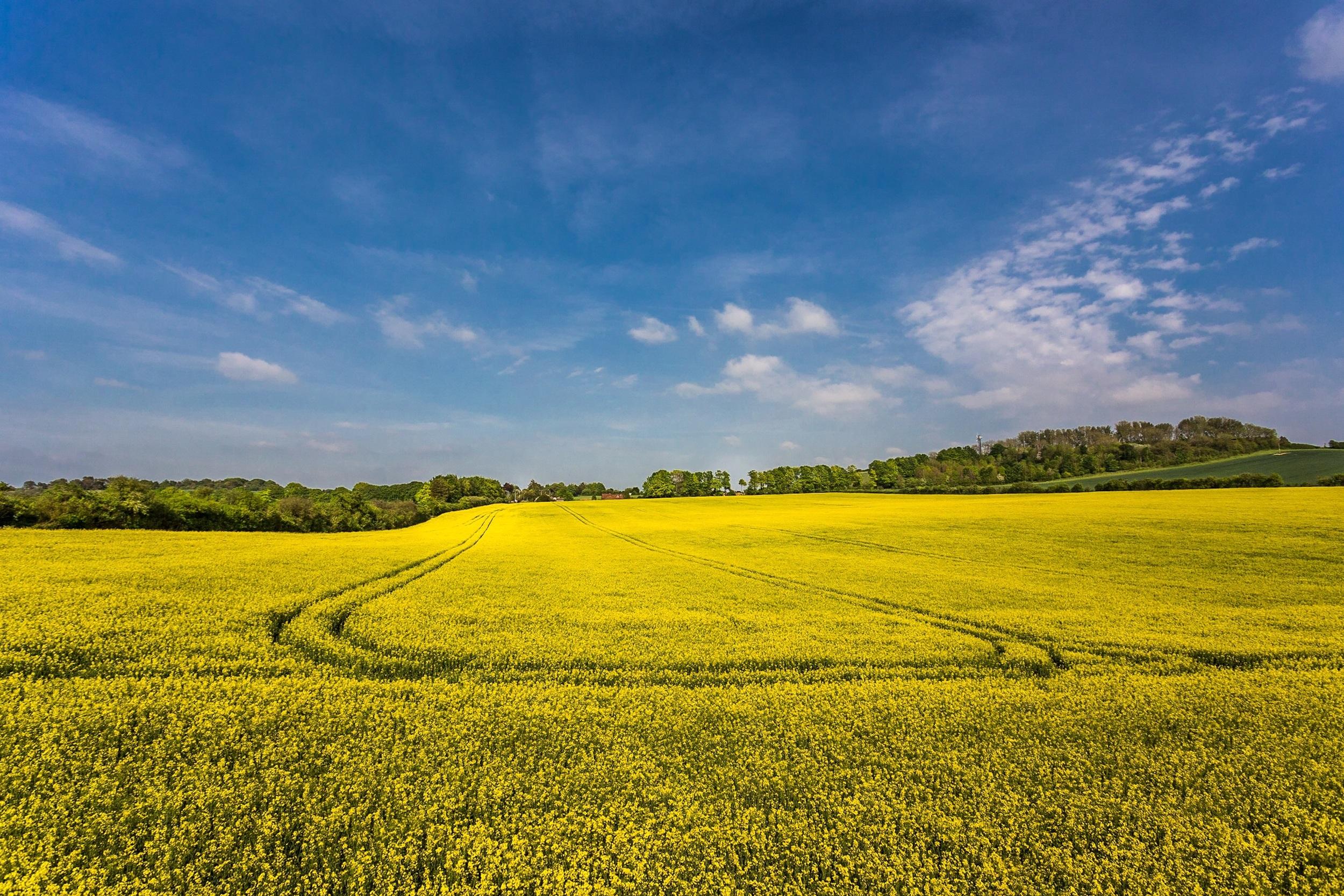 Dorset landscape photograph