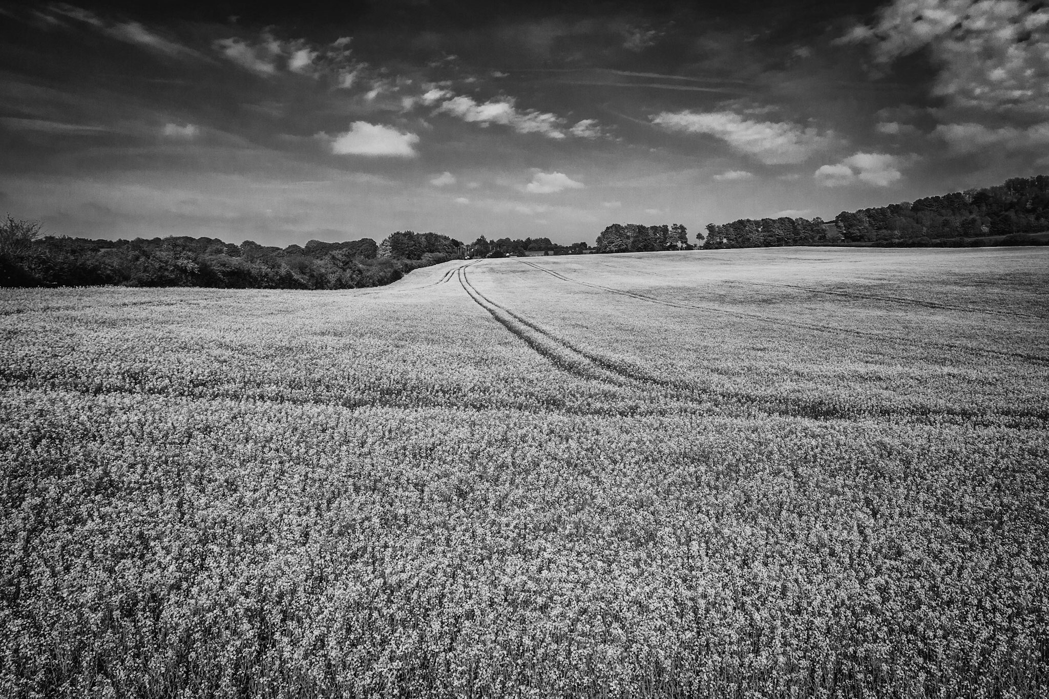 Yellow field in black and white by Wiltshire Photographer Rick McEvoy