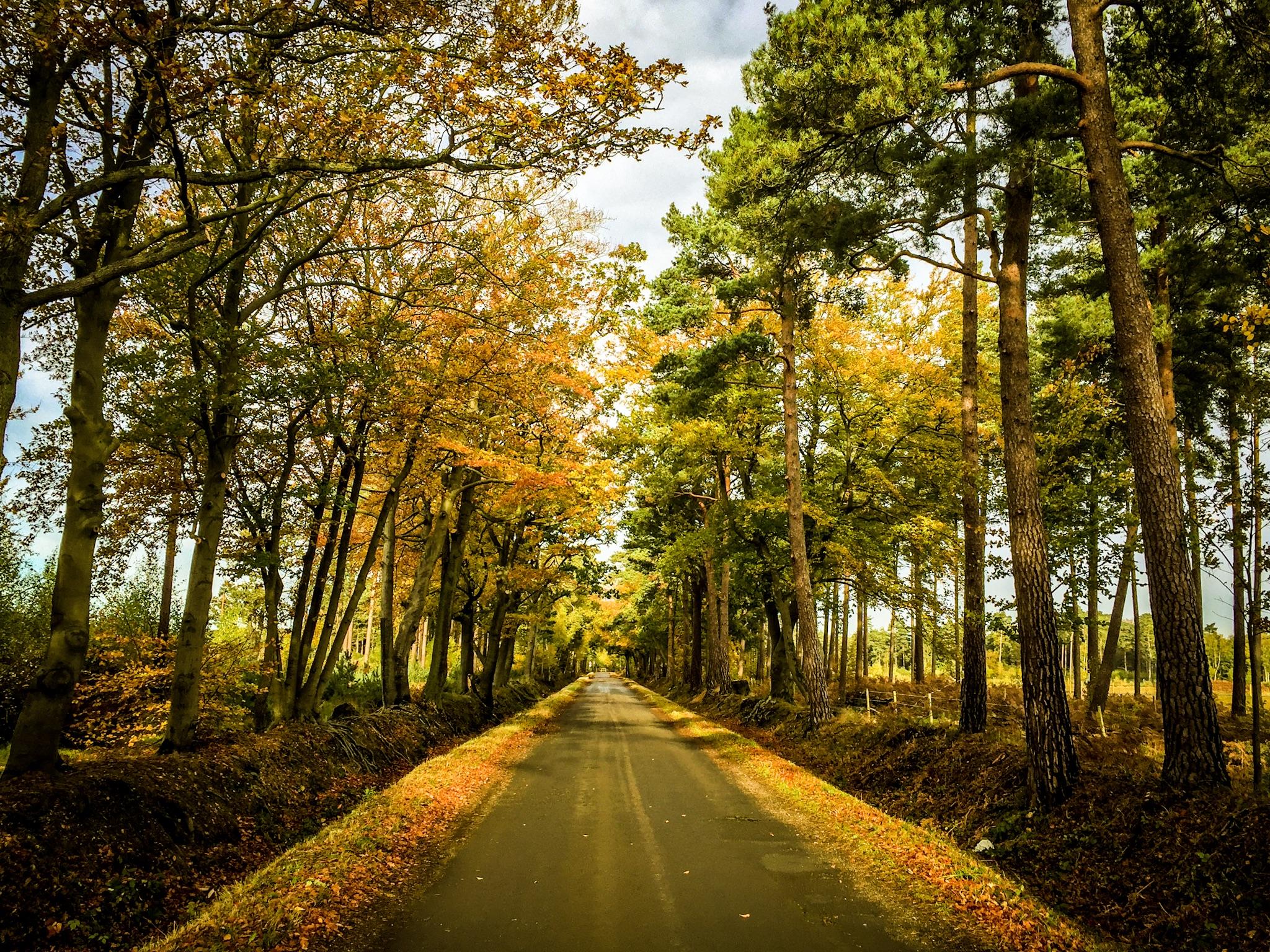 Golden light in this autumn scene by Rick McEvoy landscape photographer