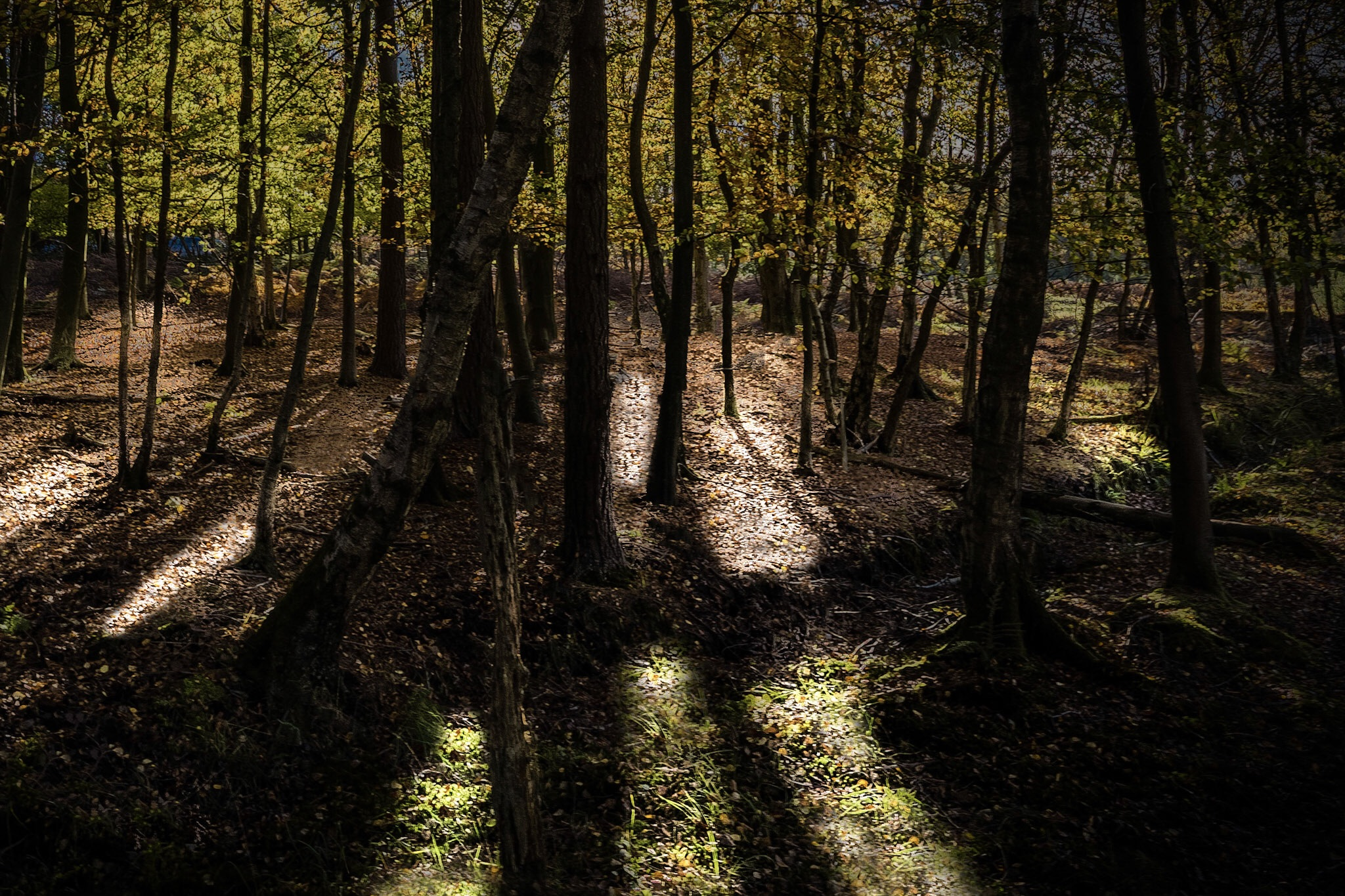 Light in the forest - the final colour version of this picture
