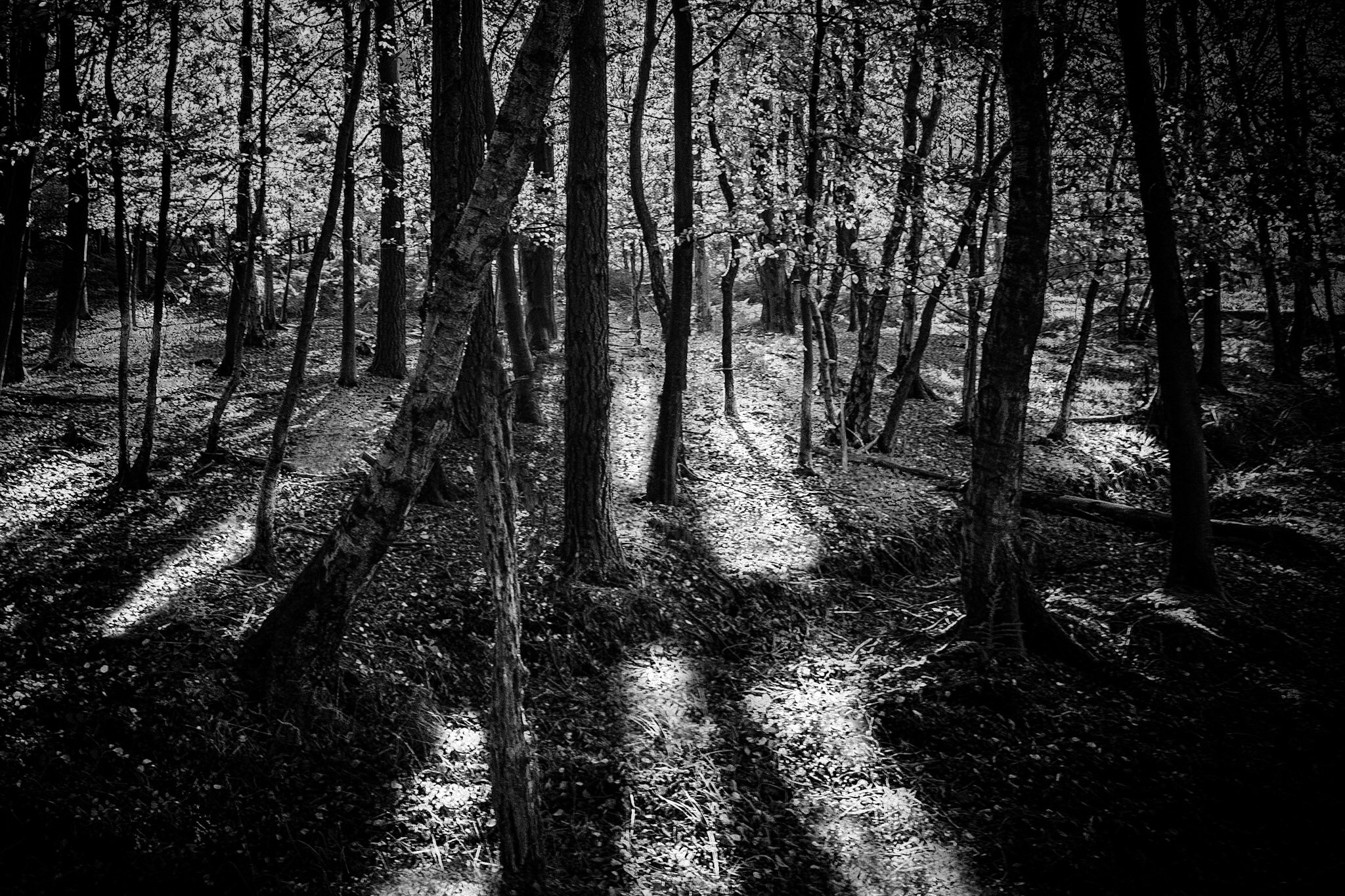 The New Forest in black and white by Rick McEvoy Hampshire Photographer