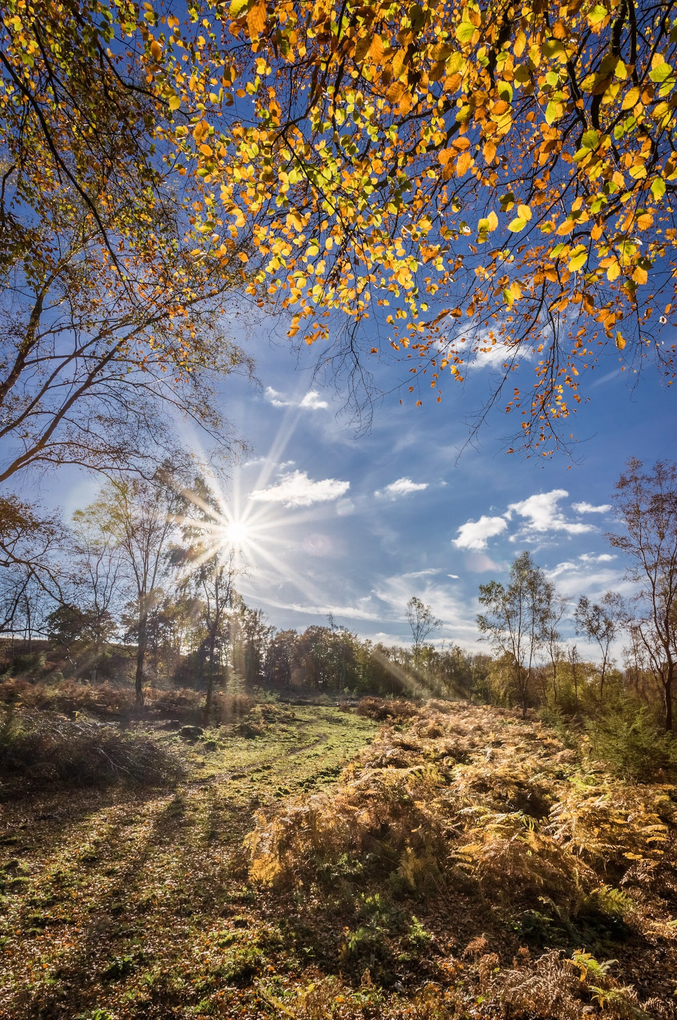 The original picture of the New Forest with all those lovely autumn colours