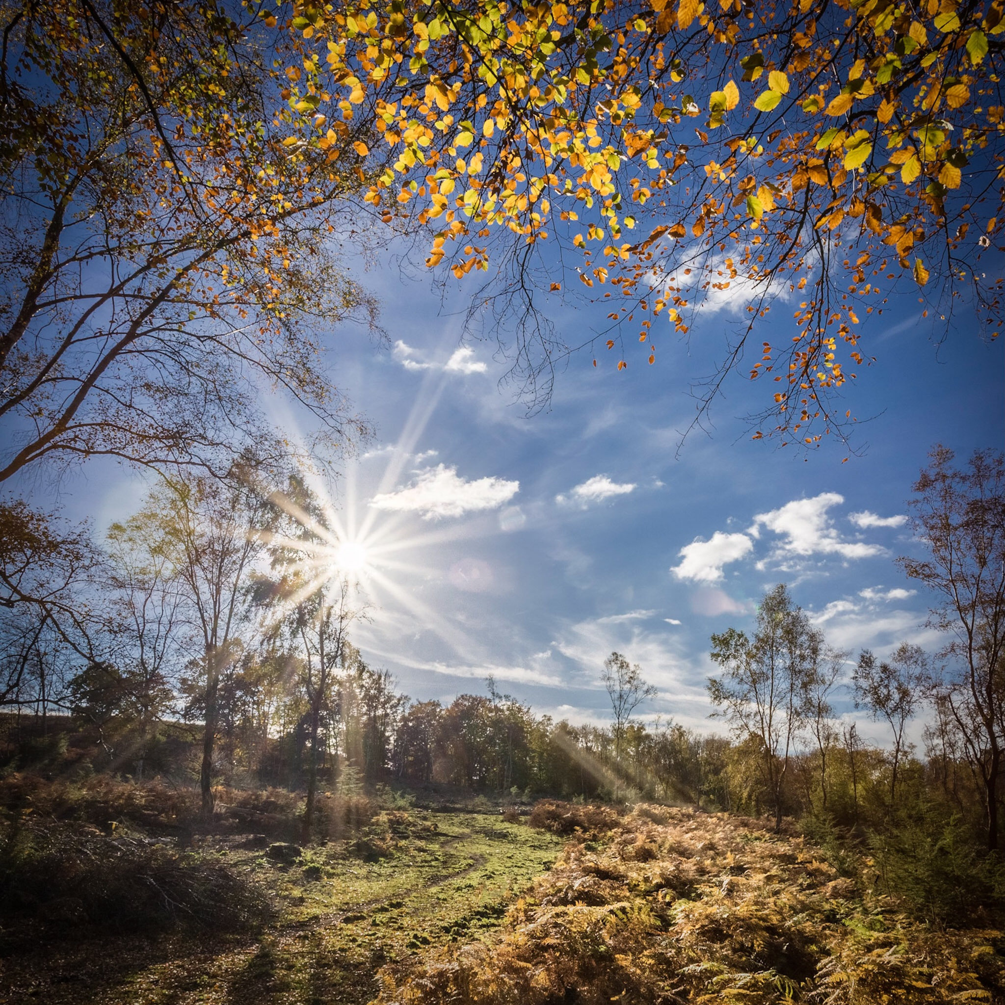 The New Forest by Rick McEvoy Hampshire Photographer