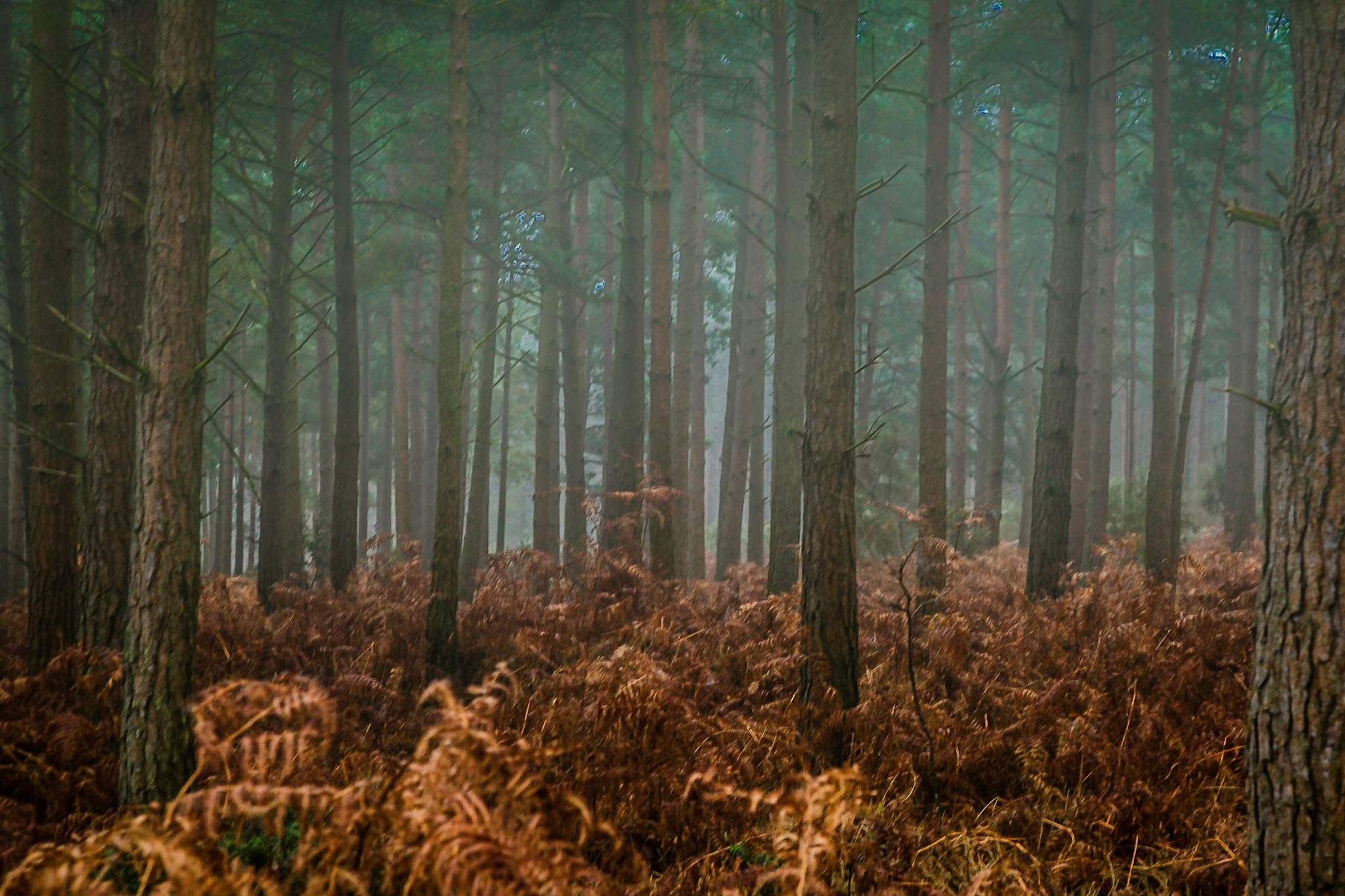 Misty forest scene in Hampshire