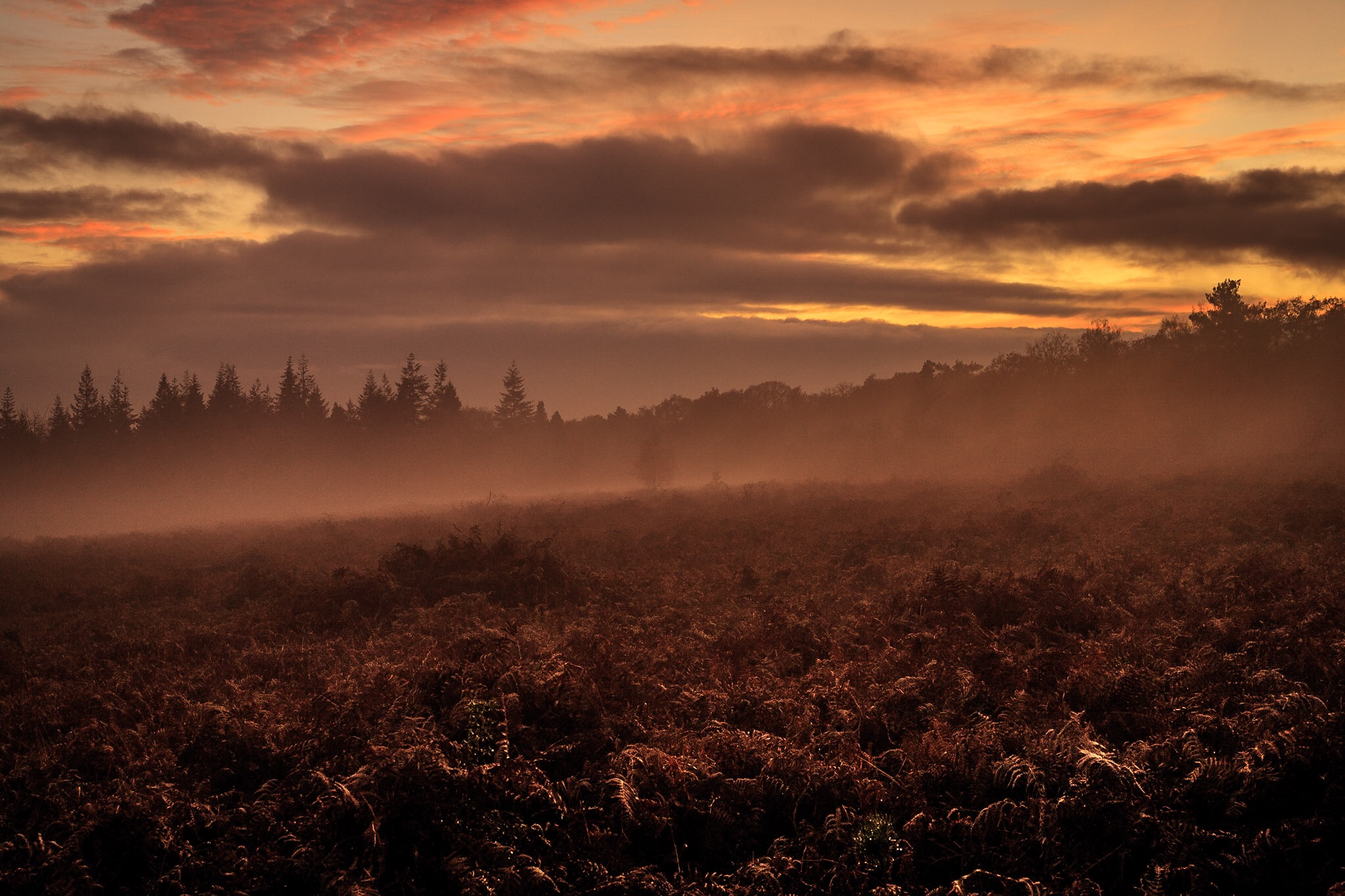 Misty sunset in the New Forest
