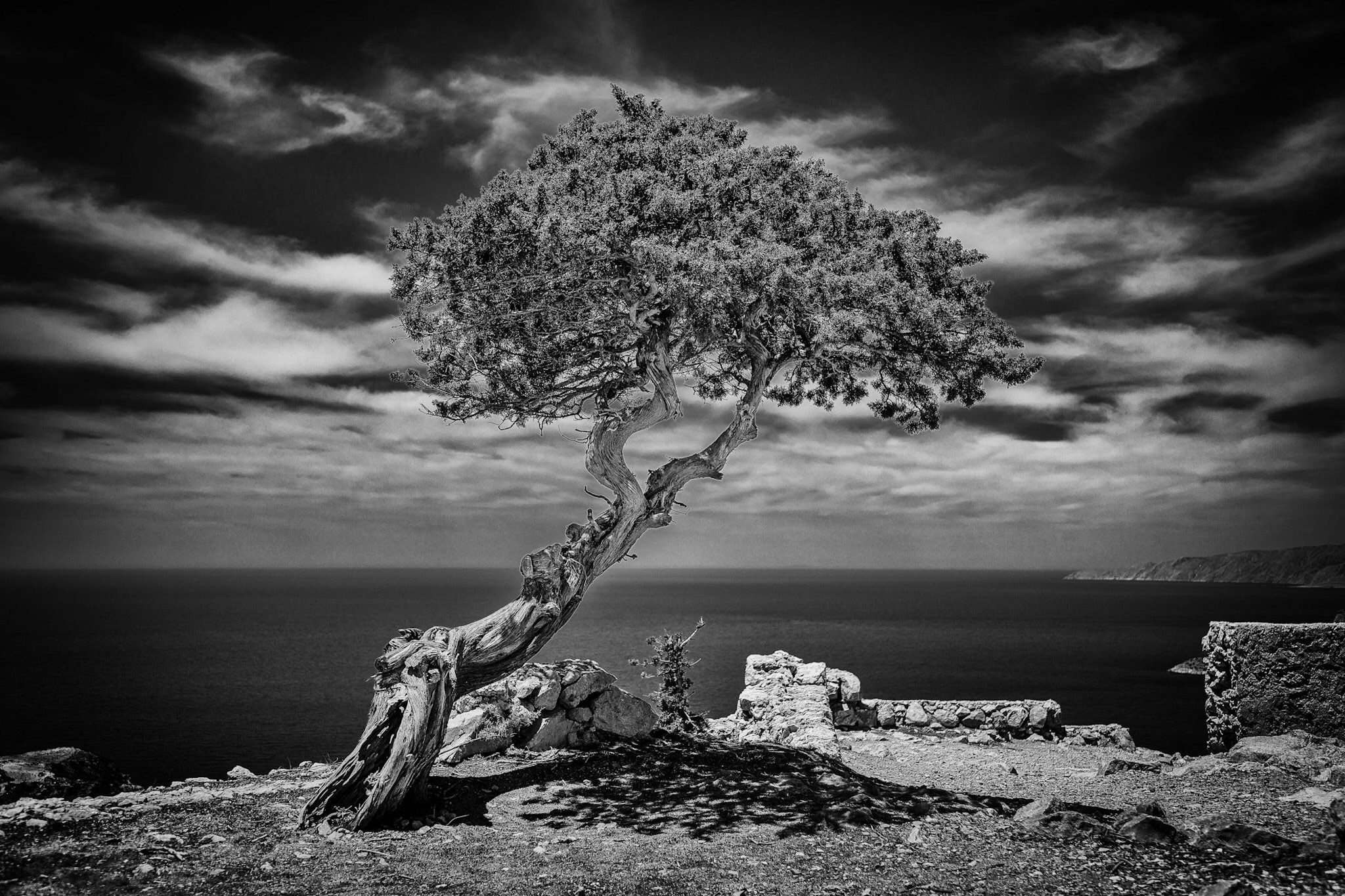 Tree in Rhodes by Rick McEvoy Landscape Photographer