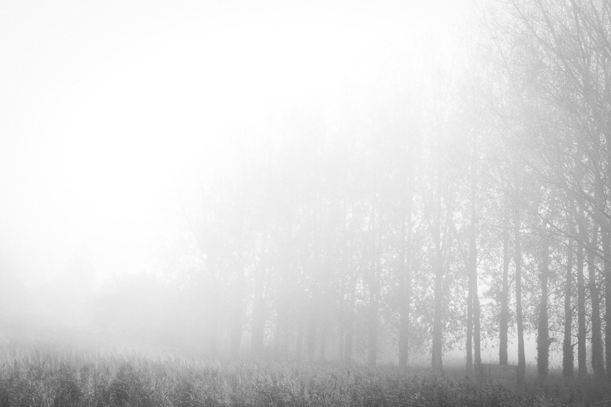 Trees near Wareham by Rick McEvoy landscape photographer in Dorset