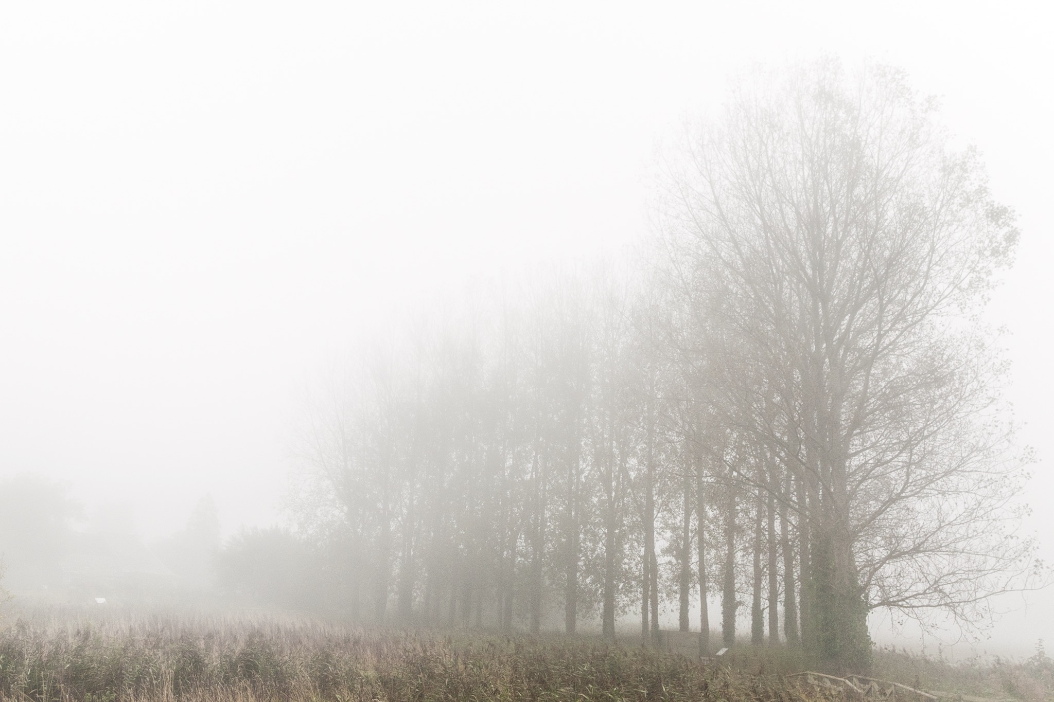 Trees in the mist - the original composition