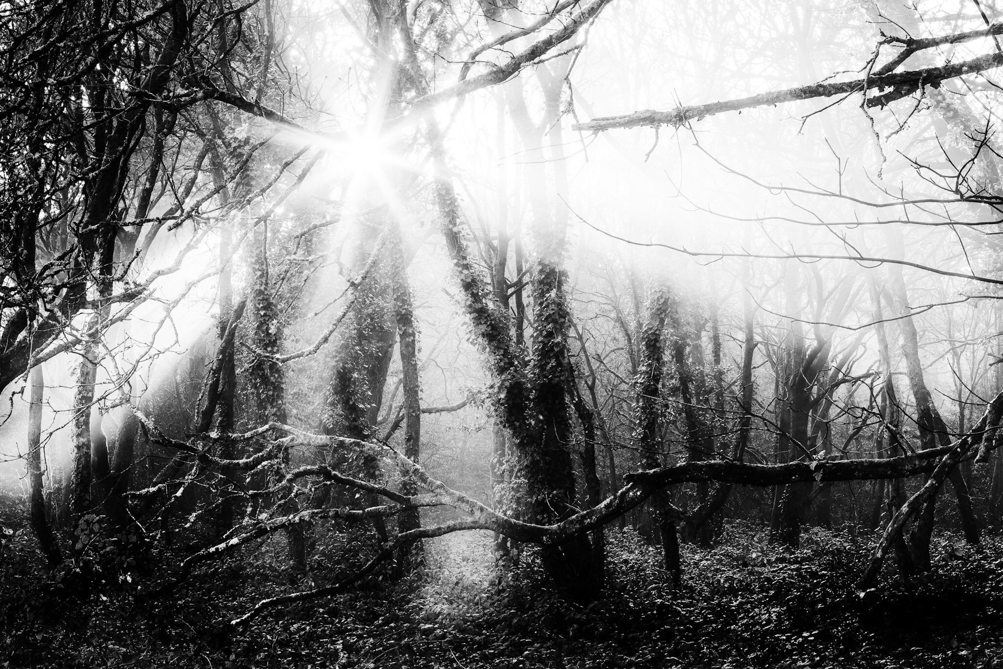 Delph Woods, Broadstone, by Rick McEvoy Poole Photographer