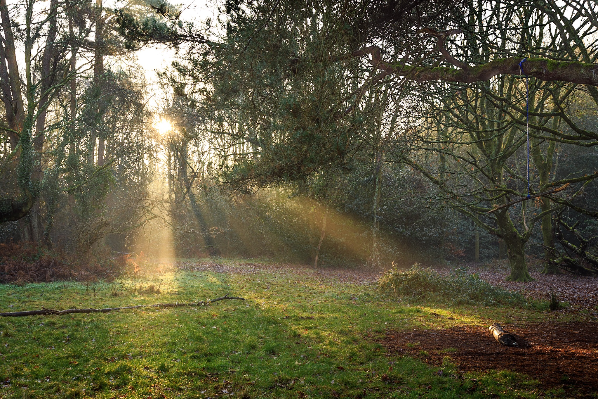 Shafts of sunlight in Delph Woods by Rick McEvoy Poole Photographer