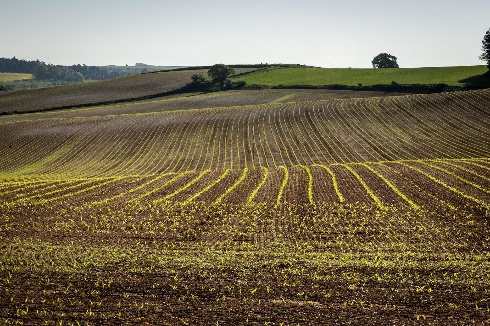 Picture of a field near Dorchester