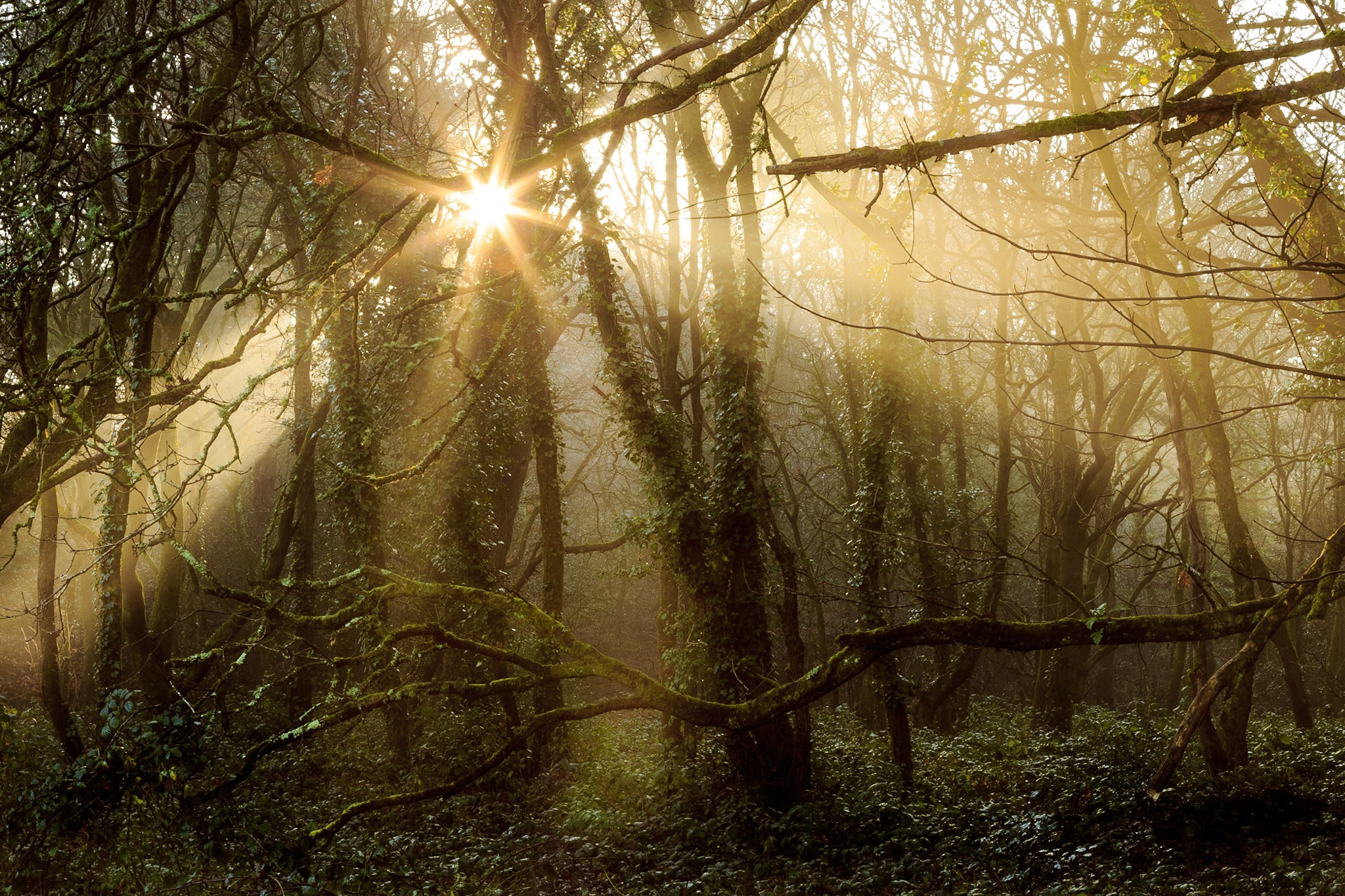 The bettter crop of this picture of the woods in Poole